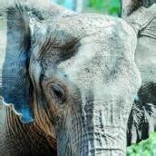 Mit Elefanten durch den Wald