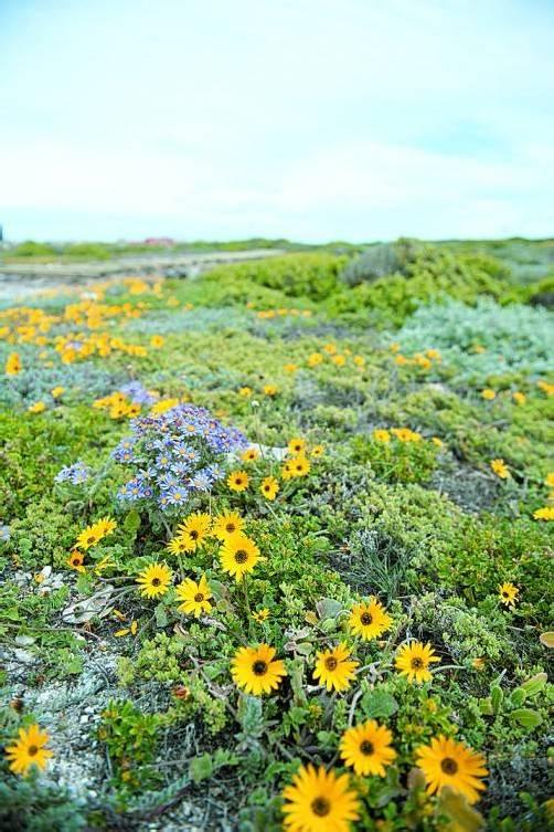 Traumhafte unberührte Natur im De-Hoop-Nationalpark.