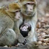 Nachwuchs erkundet den Affenberg