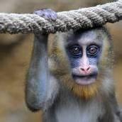 Fototermin im Dresdner Zoo