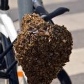 Bienenvolk auf Fahrradsattel