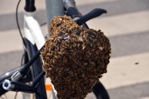 15.000 Bienen folgten ihrer Königin auf den Sattel. Foto: MA 68