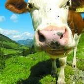 Landwirte gaben Alpflächen in der Regel in gutem Glauben an