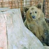 Restaurant-Bären haben ein neues Zuhause