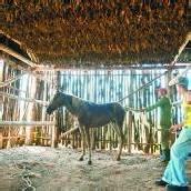 Tabakanbau und Natur im ländlichen Viñales