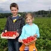 Hochbetrieb auf Erdbeerfeldern der Region