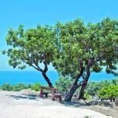 Zypern: Auf den Spuren der Aphrodite