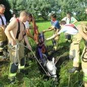 Feuerwehr befreite Pferd aus Graben