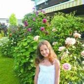 Rosenpracht in Dornbirn