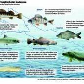 Die Einwanderer des Bodensees