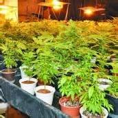 Polizei sprengt Drogendealerring