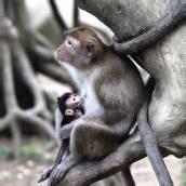 Idylle im Zoo von Taipeh