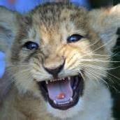 Bunte Pille für kleinen Löwen