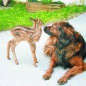 Eine dicke Tierfreundschaft