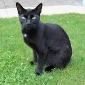 Hund tötet in Hörbranz Katze
