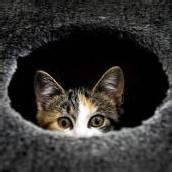 Versteckspiel