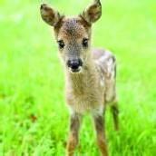 Neue Heimat Bambi Leo ist jetzt Tiroler /A6