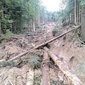 Nach Hangrutsch: Wald am Pfänder wird aufgeforstet
