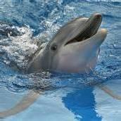 Delfine vergessen keine ehemaligen Gefährten