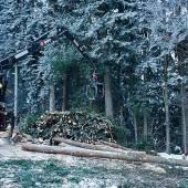 Vorarlberg sichert Waldbestände