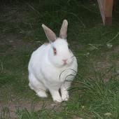 Kaninchen-Fall wurde zur Chef-Sache