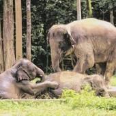 Elefanten reiten und füttern