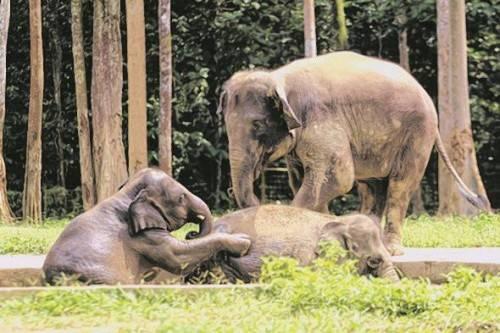 Hier kann man Elefanten beim Baden zusehen. digital images
