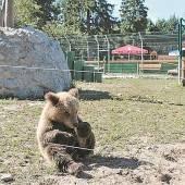 Bärenbaby Bodia fühlt sich bei Vier Pfoten schon wie zu Hause
