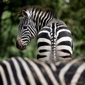 Alltag im Zoo