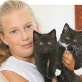 Zwei verschmuste Katzenbabys suchen ein neues Zuhause
