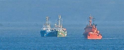 """Das Greenpeace-Schiff """"Arctic Sunrise"""" wurde von der Küstenwache geentert, die Umweltschützer daraufhin festgenommen. Foto: AP"""