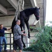 Kennelbach: Verletztes Pferd mit Kran befreit