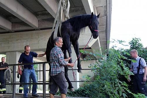 Das Pferd blieb mit einem Bein stecken und verletzte sich. Foto: VOL