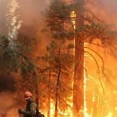 Jäger schuld an Walbränden