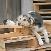 Rumänien billigt Tötung von Straßenhunden