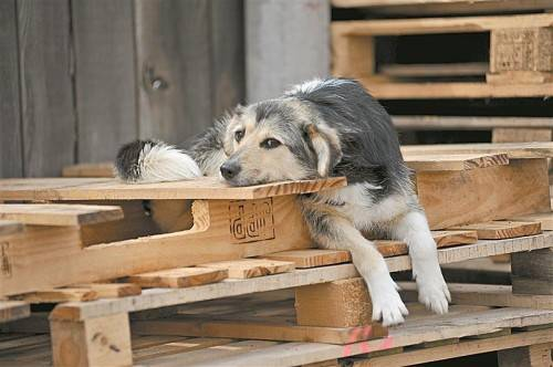 Die Tierschutzorganisation Vier Pfoten, die sich gegen die Tötung von Hunden ausspricht, fordert seit Jahren einen nationalen Aktionsplan. Foto: Vier PFoten