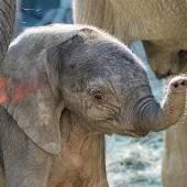 Namenssuche für Elefantenbaby