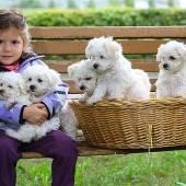 Fünf kleine weiße Freunde