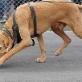 Tolle Bilanz der Polizeihunde
