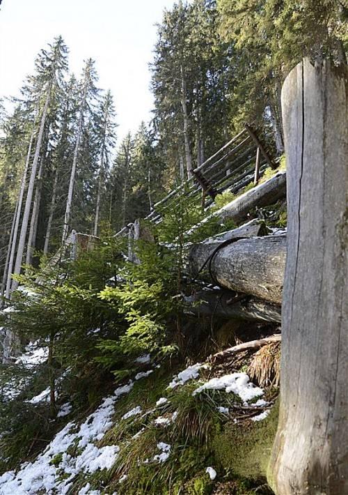 Schutzwald erfüllt wichtige Funktion in Hochlagen. Foto: stiplovsek