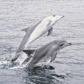 Ein Besuch im Delfinarium