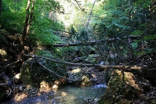 Zahlreiche entwurzelte Bäume und das Totholz im Bachbett sowie Bäume im Nahbereich des Klausmühlebaches müssen entfernt werden. Foto: bms