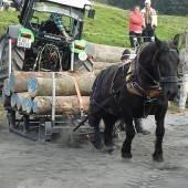 Die echten Pferdestärken