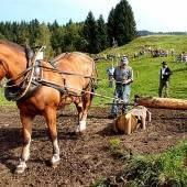 Fuhrmannstage in Dornbirn als Pferdespektakel