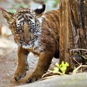 Tigerbaby getauft