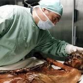 Neuer Ötzi-Aufpasser soll Gefahr des Zerfalls abwenden
