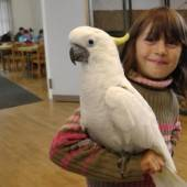 Größte Vogelschau in Westösterreich