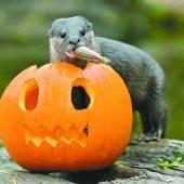 Halloween-Menü