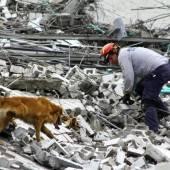 Hochhauseinsturz: Hunde fanden Tote