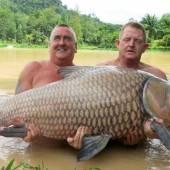 Brite fischte 60-Kilogramm- Karpfen